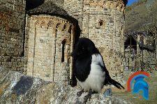 Sant Climent de Taüll – San Clemente de Tahull